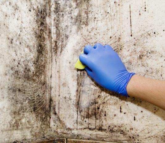 Skimmelsvamp kan være svært at komme af med. Nye vinduer kan være løsningen.