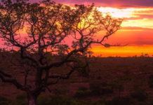 Oplev Afrika