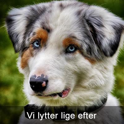 billigt Hundefoder