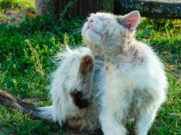 Loppemidler hund og kat